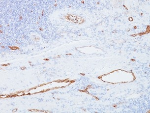 Immunohistochemistry (Formalin/PFA-fixed paraffin-embedded sections) - Anti-Von Willebrand Factor antibody [3E2D10] (ab194405)