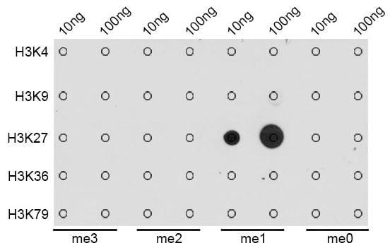 Dot Blot - Anti-Histone H3 (mono methyl K27) antibody (ab194688)
