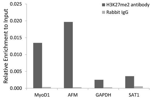 ChIP - Anti-Histone H3 (di methyl K27) antibody (ab194690)