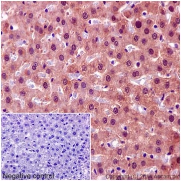 Immunohistochemistry (Formalin/PFA-fixed paraffin-embedded sections) - Anti-KCTD5 antibody [EPR16312] - C-terminal (ab194825)