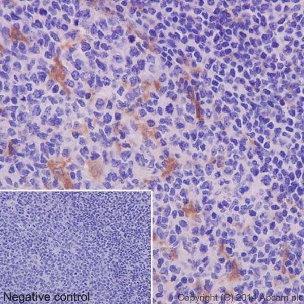 Immunohistochemistry (Formalin/PFA-fixed paraffin-embedded sections) - Anti-TARC/CCL17 antibody [EPR15861] (ab195044)