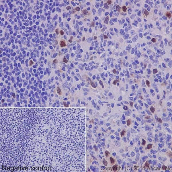 Immunohistochemistry (Formalin/PFA-fixed paraffin-embedded sections) - Anti-Geminin antibody [EPR14637] (ab195047)