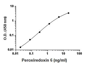 Sandwich ELISA - Recombinant Mouse Peroxiredoxin 6 protein (ab195174)