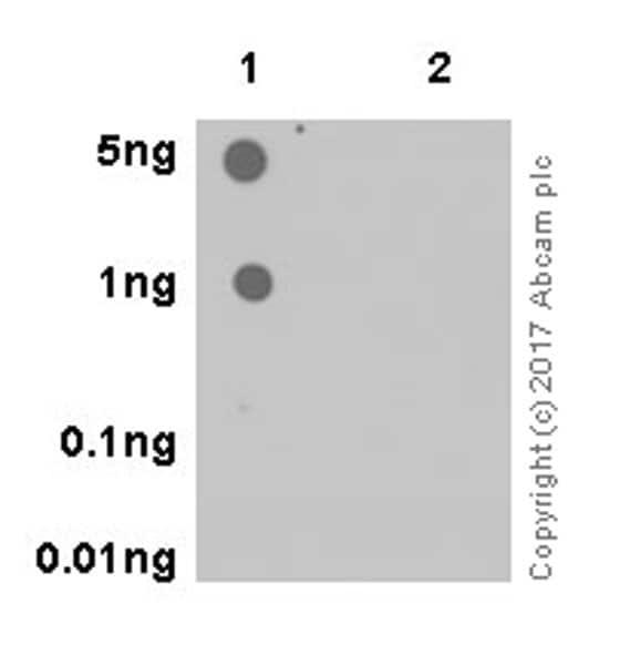 Dot Blot - Anti-ATG16L1 (phospho S278) antibody [EPR19016] (ab195242)