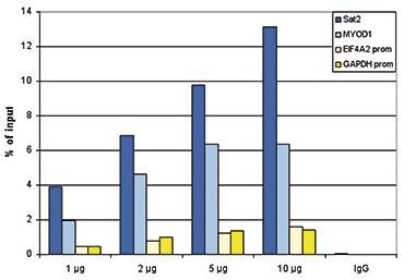 ChIP - Anti-Histone H2A antibody - ChIP Grade, purified (ab195322)