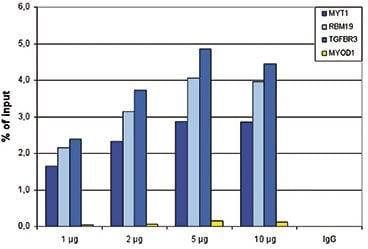 ChIP - Anti-KDM1 / LSD1 antibody - ChIP Grade (ab195405)