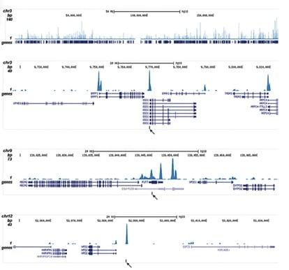 ChIP-sequencing - Anti-CBFb antibody - ChIP Grade (ab195411)