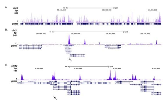 CHIPseq - Anti-Histone H3 (acetyl K27) antibody - ChIP Grade (ab195415)