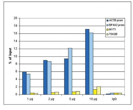 ChIP - Anti-Histone H3 (acetyl K27) antibody - ChIP Grade (ab195415)