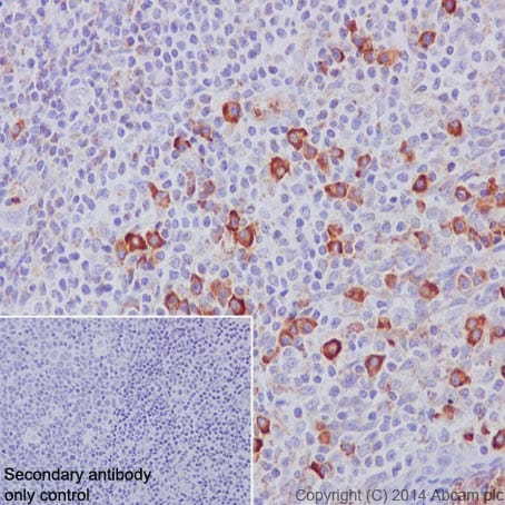 Immunohistochemistry (Formalin/PFA-fixed paraffin-embedded sections) - Anti-CD9 antibody [EPR2949] - BSA and Azide free (ab195422)