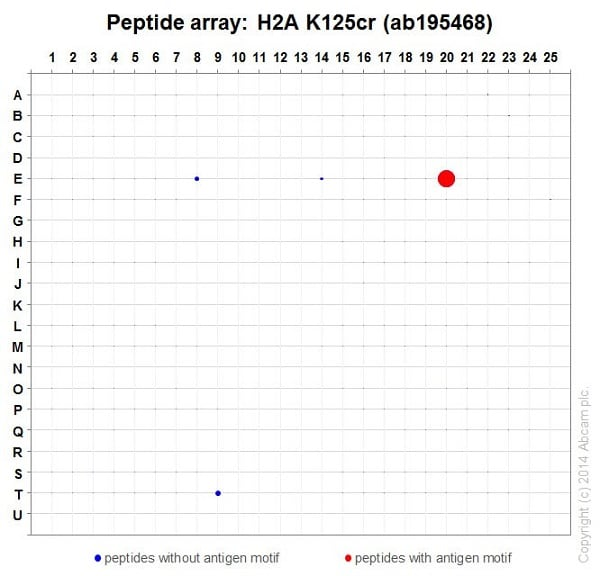 Peptide Array - Anti-Histone H2A (crotonyl K125) antibody [EP18770] (ab195468)