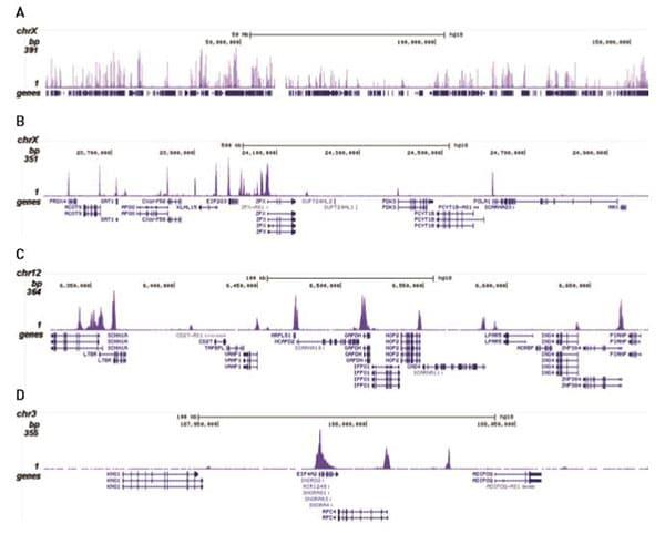 CHIPseq - Anti-Histone H3 (acetyl K56) antibody - ChIP Grade (ab195478)