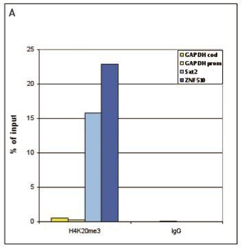CHIPseq - Anti-Histone H4 (tri methyl K20) antibody - ChIP Grade (ab195479)