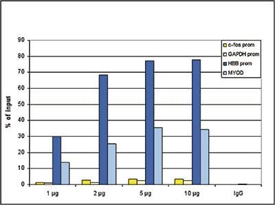 ChIP - Anti-Histone H3 (di methyl K9) antibody (ab195482)