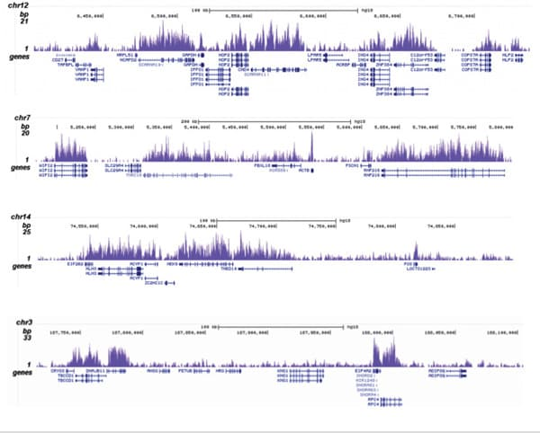 ChIP-sequencing - Anti-Histone H3 (tri methyl K36) antibody - ChIP Grade (ab195489)