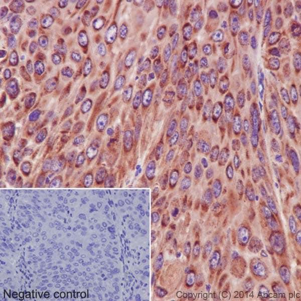 Immunohistochemistry (Formalin/PFA-fixed paraffin-embedded sections) - Anti-NDUFS6 antibody [EPR15957-37] (ab195808)