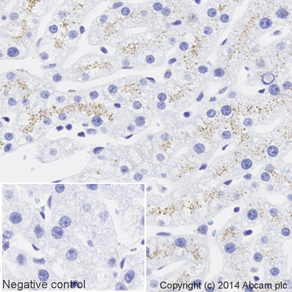 Immunohistochemistry (Formalin/PFA-fixed paraffin-embedded sections) - Anti-Apolipoprotein E antibody [EP1374Y] (HRP) (ab195855)