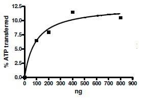 Functional Studies - Recombinant human JNK3 protein (ab196055)
