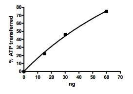 Functional Studies - Recombinant human CERK protein (ab196089)