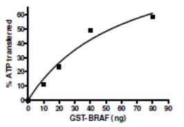 Functional Studies - Recombinant human BRAF protein (ab196139)