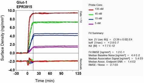 Other - Anti-Glucose Transporter GLUT1 antibody [EPR3915] - Low endotoxin, Azide free (ab196357)