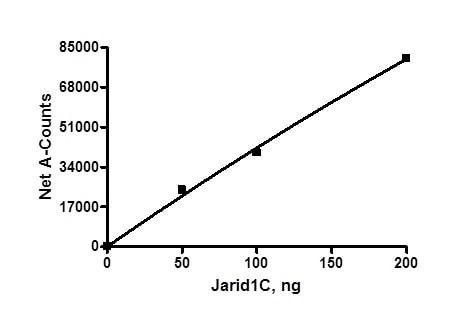 Functional Studies - Recombinant human KDM5C / Jarid1C / SMCX protein (ab196392)