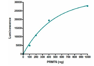Functional Studies - Recombinant human PRMT6 protein (ab196434)
