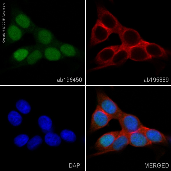 Immunocytochemistry/ Immunofluorescence - Alexa Fluor® 488 Anti-SOX9 antibody [EPR14335] (ab196450)