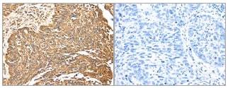 Immunohistochemistry (Formalin/PFA-fixed paraffin-embedded sections) - Anti-ERK5 antibody (ab196609)