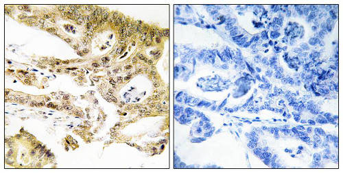 Immunohistochemistry (Formalin/PFA-fixed paraffin-embedded sections) - Anti-DRIP130 antibody (ab196752)