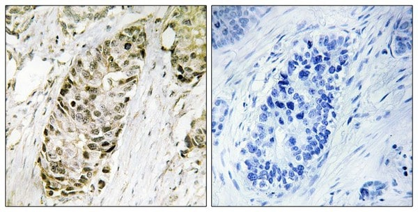 Immunohistochemistry (Formalin/PFA-fixed paraffin-embedded sections) - Anti-GADD45G/CR6 antibody (ab196774)