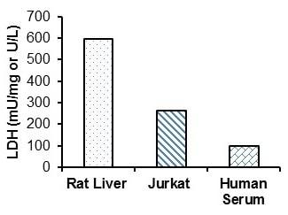 Functional Studies - Lactate Dehydrogenase (LDH) Assay Kit (Fluorometric) (ab197000)