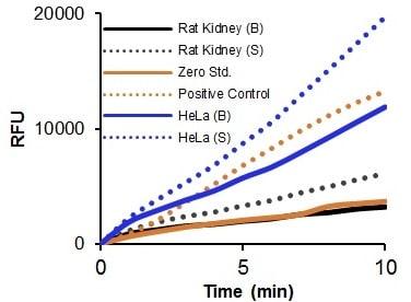 Functional Studies - Adenosylhomocysteinase (AHCY) Activity Assay Kit (Fluorometric) (ab197002)