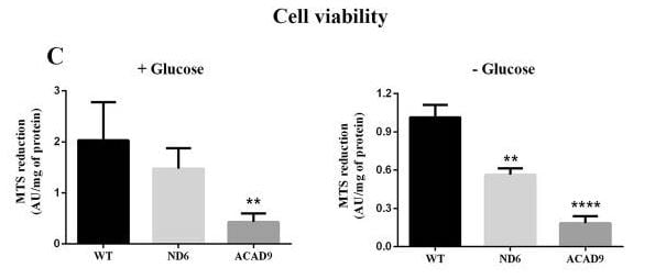 Fibroblast Cell Viability MTS Assay