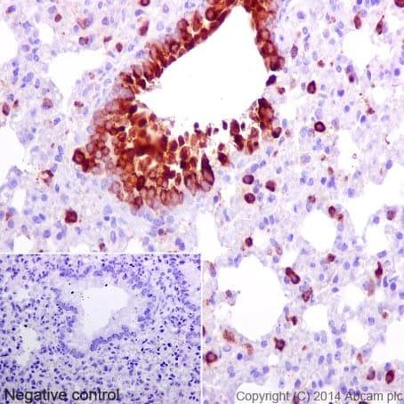 Immunohistochemistry (Formalin/PFA-fixed paraffin-embedded sections) - Anti-CXCL15 antibody [EPR14470] (ab197016)