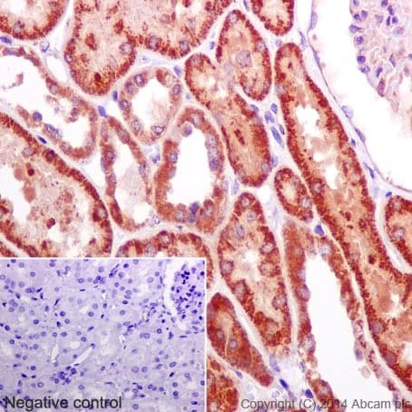 Immunohistochemistry (Formalin/PFA-fixed paraffin-embedded sections) - Anti-NUDT9 antibody [EPR15175] (ab197021)