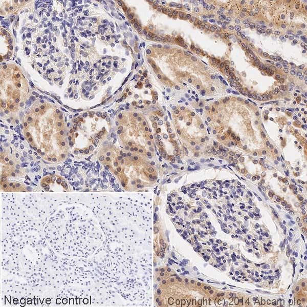 Immunohistochemistry (Formalin/PFA-fixed paraffin-embedded sections) - Anti-Glutathione Peroxidase 1 antibody [EPR3312] (HRP) (ab197034)