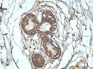 Immunohistochemistry (Formalin/PFA-fixed paraffin-embedded sections) - Anti-Rab20 antibody (ab197209)