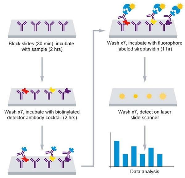 Assay summary for Abcam Human Cytokine Antibody Array (160 Targets) - Quantitative (ab197427)