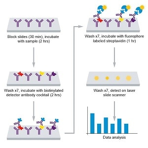 Assay summary for Human Inflammation Antibody Array (10 targets)- Quantitative  (ab197449)