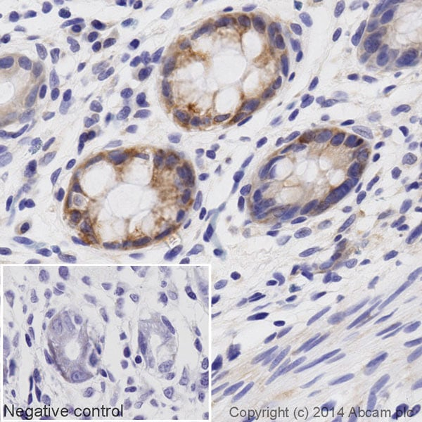 Immunohistochemistry (Formalin/PFA-fixed paraffin-embedded sections) - Biotin Anti-AIF antibody [E20] - Mitochondrial Marker (ab197526)