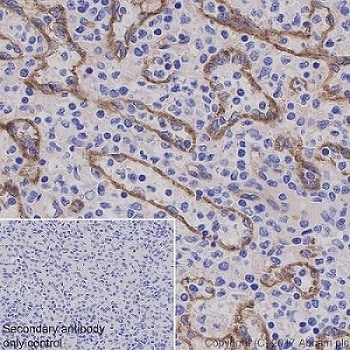 Immunohistochemistry (Formalin/PFA-fixed paraffin-embedded sections) - Anti-ICAM2 antibody [EPR19114-113] (ab197570)