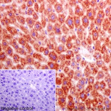 Immunohistochemistry (Formalin/PFA-fixed paraffin-embedded sections) - Anti-Annexin-7/ANXA7 antibody [EPR17090] (ab197586)