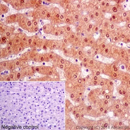 Immunohistochemistry (Formalin/PFA-fixed paraffin-embedded sections) - Anti-ketohexokinase antibody [EPR15847] (ab197593)