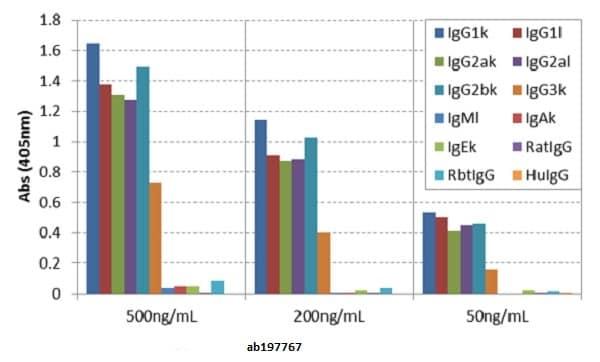 ELISA - Anti-Mouse IgG antibody [RMG07] (ab197767)
