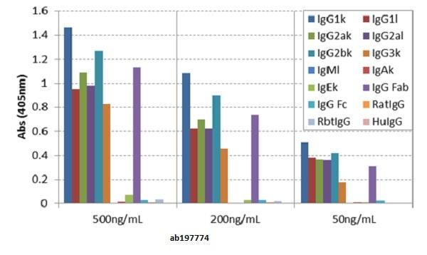 ELISA - Anti-mouse IgG fab antibody [RMG05] (ab197774)