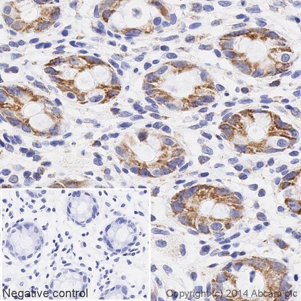 Immunohistochemistry (Formalin/PFA-fixed paraffin-embedded sections) - Anti-UQCRC2 antibody [13G12AF12BB11] (HRP) (ab197954)