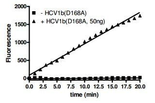 Functional Studies - Recombinant Hepatitis C Virus NS3 + NS4A (mutated D168 V) protein (ab198098)