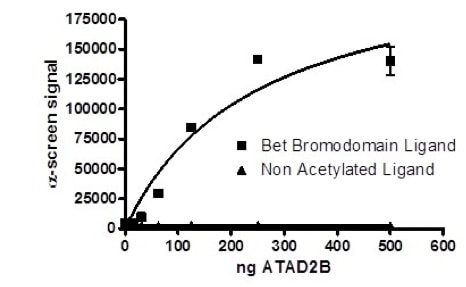 Functional Studies - Recombinant human ATAD2B protein (ab198150)