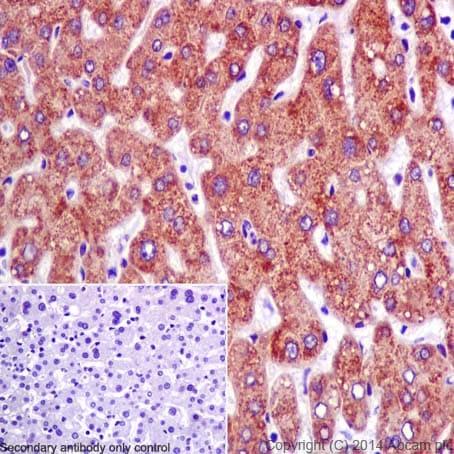Immunohistochemistry (Formalin/PFA-fixed paraffin-embedded sections) - Anti-DMGDH antibody [EPR16908] (ab198292)